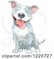 Clipart Of A Cute Happy Gray And White Pit Bull Dog Sitting Royalty Free Vector Illustration