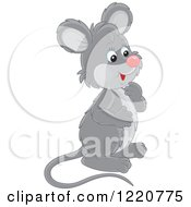 Clipart Of A Cute Curious Gray Mouse Facing Right Royalty Free Vector Illustration
