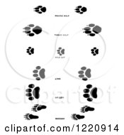 Clipart Of Black And White Wolf Wildcat And Raccoon Tracks Royalty Free Vector Illustration