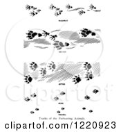 Black And White Tracks Of Furbearing Animals