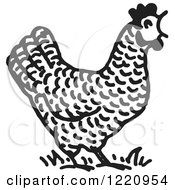 Black And White Crowing Rooster