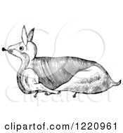 Black And White Rabbit Trussed For Roasting