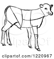 Black And White Lamb Showing Cuts Of Veal