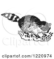 Clipart Of A Black And White Raccoon Royalty Free Vector Illustration