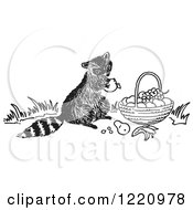 Clipart Of A Black And White Raccoon Eating Fruit From A Basket Royalty Free Vector Illustration