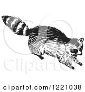 Black And White Raccoon 2