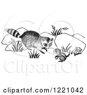 Clipart Of A Black And White Raccoon And Chipmunk Royalty Free Vector Illustration