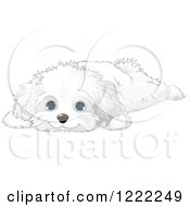 Clipart Of A Cute Bichon Frise Or Maltese Puppy Dog Resting Royalty Free Vector Illustration by Pushkin