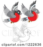 Clipart Of Outlined And Colored Cute Bullfinch Birds Flying Royalty Free Vector Illustration