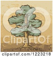Clipart Of A Sketched Mature Oak Tree On Brown And Tan Royalty Free Vector Illustration by Any Vector