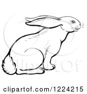 Clipart Of A Black And White Curious Rabbit Royalty Free Vector Illustration
