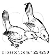 Clipart Of Black And White Birds Pecking The Ground Royalty Free Vector Illustration