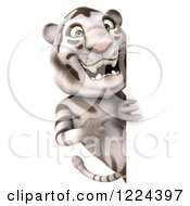 Clipart Of A 3d White Tiger Mascot Pointing Around A Sign Royalty Free Illustration