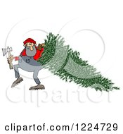 Lumberjack Man Pulling A Fresh Cut Christmas Tree