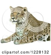 Clipart Of A Sitting Leopard Royalty Free Vector Illustration by dero