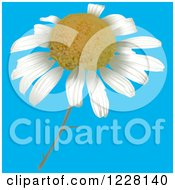 Clipart Of A Camomile Flower Royalty Free Vector Illustration