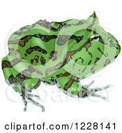Green Surinam Horned Frog