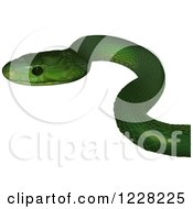 Clipart Of An Eastern Green Mamba Snake Royalty Free Vector Illustration by dero