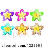 Colorful Tropical Star Shaped Flowers