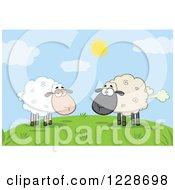 Ewe Watching Another Flatulent Sheep Farting On A Hill