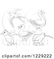 Clipart Of Outlined Cute Birds Royalty Free Vector Illustration by Alex Bannykh