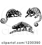 Black And White Chameleon Lizards