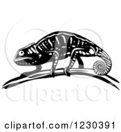 Black And White Chameleon Lizard 3