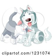Cute Gray Cat Rubbing Against A Husky Dog