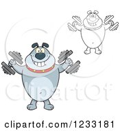 Clipart Of A Gray And Outlined Bulldog Working Out With Dumbbells Royalty Free Vector Illustration