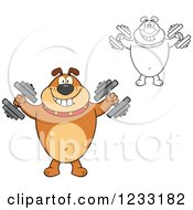 Clipart Of A Brown And Outlined Bulldog Working Out With Dumbbells Royalty Free Vector Illustration
