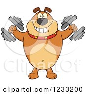 Clipart Of A Brown Bulldog Working Out With Dumbbells Royalty Free Vector Illustration by Hit Toon
