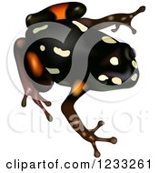 Clipart Of A Brazil Nut Poison Dart Frog Royalty Free Vector Illustration by dero