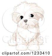 Cute Bichon Frise Or Maltese Puppy Dog Sitting