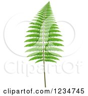 Clipart Of A Fern Branch Royalty Free Vector Illustration by dero