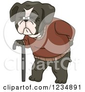 Clipart Of An Old Boston Terrir Dog Walking With A Cane Royalty Free Vector Illustration