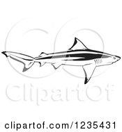 Black And White Bull Shark