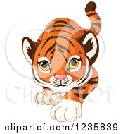 Clipart Of A Cute Tiger Cub Stalking Royalty Free Vector Illustration by Pushkin