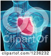 Clipart Of A 3d Human Body Heart And Circulatory System Royalty Free CGI Illustration