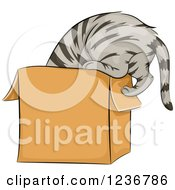 Clipart Of A Curious Tabby Cat Climbing Into A Box Royalty Free Vector Illustration