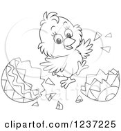Clipart Of An Outlined Happy Easter Chick Jumping And Hatching Grom An Egg Royalty Free Vector Illustration