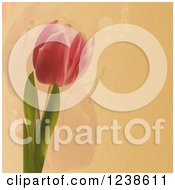 Tulip Flower Over Textured Paper And Faint Flowers