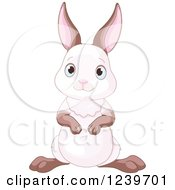 Clipart Of A Cute White And Brown Alert Bunny Rabbit Royalty Free Vector Illustration by Pushkin