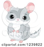 Clipart Of A Cute Gray Chinchilla Royalty Free Vector Illustration