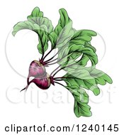Clipart Of Engraved Beets And Greens Royalty Free Vector Illustration