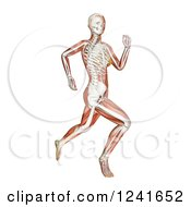 Clipart Of A 3d Female Runner With Visible Skeleton And Muscle On White Royalty Free Illustration