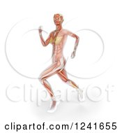Clipart Of Anatomy Of A 3d Female Runner Royalty Free Illustration