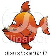 Mean Orange Pacu Pirhanna Fish With Sharp Teeth Animal Clipart Illustration
