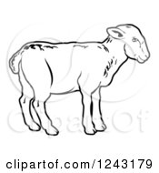 Black And White Lamb In Profile