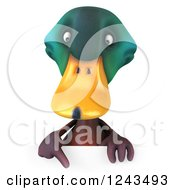 Clipart Of A 3d Mallard Drake Duck Pointing Down Over A Sign Royalty Free Illustration