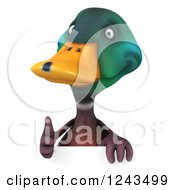 Clipart Of A 3d Mallard Drake Duck Holding A Thumb Up Over A Sign Royalty Free Illustration
